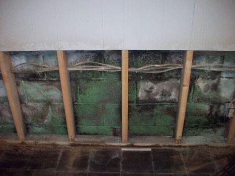 basement top to bottom mold removal basement waterproofing scoop