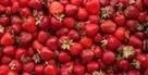 Accord mets/vins :  Que boire avec... des fraises ? | Accords Mets & Vins - Muscat de Beaumes de Venise | Scoop.it