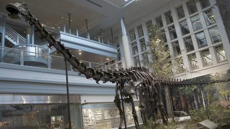 Hallan en Argentina un dinosaurio 7 veces más grande que el T-Rex - FayerWayer | Software libre | Scoop.it