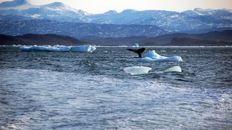 Les océans malades du réchauffement climatique | Zones humides - Ramsar - Océans | Scoop.it