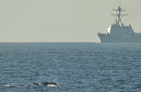 Petition demands US Navy halt plan to deafen 15K whales & dolphins and kill 1,800 more | Coffee Party Science | Scoop.it
