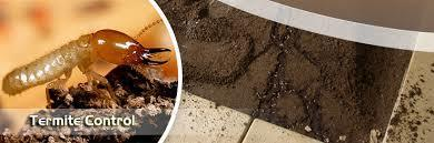 Pest Control Services in Faridabad | Pest Control Services Delhi NCR | Scoop.it