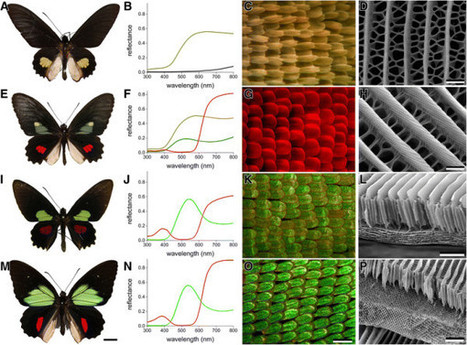 The best images from 2014 in BMC Evolutionary Biology | Amazing Science | Scoop.it
