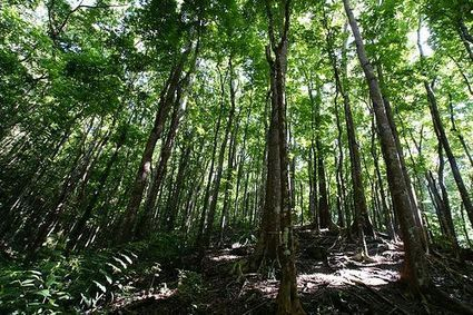 Forest Management, Cultivation Key for Sustainability and a Healthy Planet   Sustainable Futures   Scoop.it