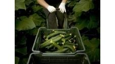 A Hong Kong, concombres et carottes cultivés entre ciel et terre | Économie circulaire locale et résiliente pour nourrir la ville | Scoop.it