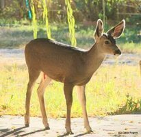 Save Wildlife:  Apply for a Hunting Permit | GarryRogers Biosphere News | Scoop.it