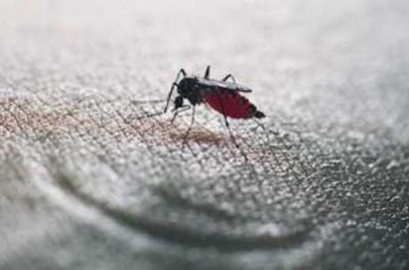Chikungunya, dengue : 30 départements sont désormais concernés | Toxique, soyons vigilant ! | Scoop.it