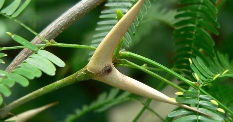 10 nouvelles histoires extraordinaires chez nos amies les fourmis ~ Sweet Random Science | EntomoScience | Scoop.it