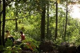 El Contacto Con la Naturaleza Refuerza la Vitalidad del Ser Humano | ecología y felicidad | Scoop.it