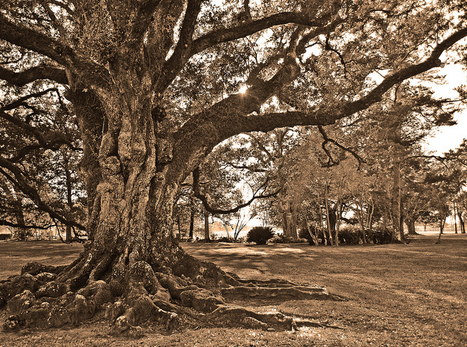 Oak Alley Plantation - Lousiana | Oak Alley Plantation: Things to see! | Scoop.it