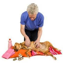 See Spot relax: Pet massage gaining popularity - Colorado Springs Gazette | Equine Bodywork | Scoop.it