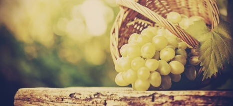 Découverte de domaines français - Wine Tour Booking | Weickmann | Scoop.it