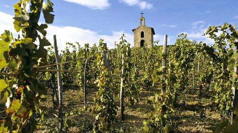 VIDEO. Le secteur du vin recrute grâce au développement du bio | Vin Bio et naturel | Scoop.it
