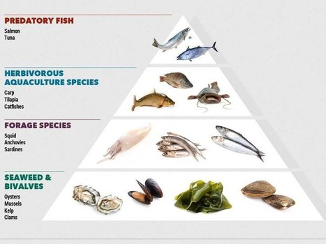FORGET TUNA: These Are The Seafoods We'll Be Eating In The Future | Aquaculture | Scoop.it