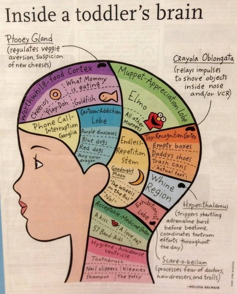 How A Toddler's Brain Actually Works | Edudemic | Portable MS MIT Degree | Scoop.it