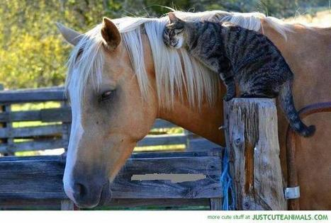 Awww . . . that cat loves his horse   Equine Photography   Scoop.it