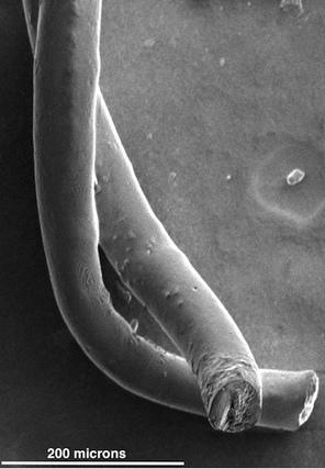 Why carbon-nanotube fibers make ideal implantable brain electrodes | KurzweilAI | Cogmach | Scoop.it