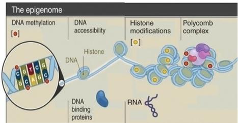 SANTÉ du NOUVEAU-NÉ: La parentalité biologique commence bien avant la conception - Science | Evidence Based Medecine | Scoop.it