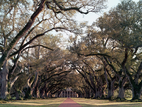 They Shoot Film: A Photo Collective | Oak Alley Plantation: Things to see! | Scoop.it