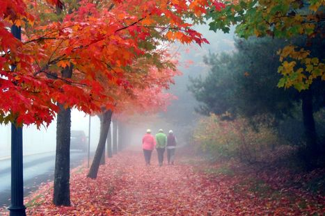 10 Fun Ways to Enjoy an Autumn Walk | One Step at a Time | Scoop.it