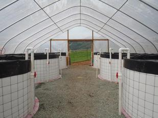 Southern Oregon farm building business on aquaponics - Sustainable Business Oregon | Vertical Farm - Food Factory | Scoop.it