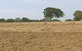 Safra de soja deve ser maior no verão de Goiás | oilseed | Scoop.it