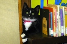Flavorwire » Famous and Fabulous Library Cats   Library Cats   Scoop.it