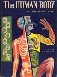 The Human Body: What It Is and How It Works, in Vibrant Vintage Illustrations circa 1959 | Inspiration | Scoop.it