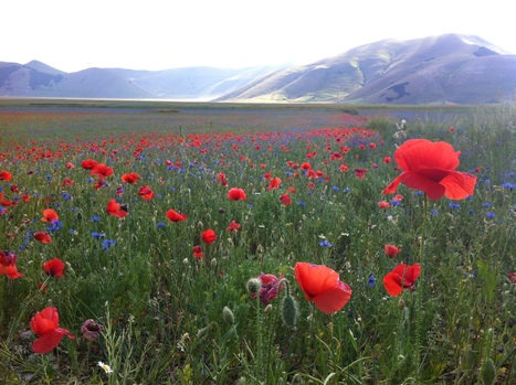 The Wild Plains of Stunning Castelluccio | Hideaway Le Marche | Scoop.it