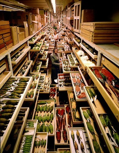The Value of Museum Collections for Research and Society | Herbaria and research | Scoop.it