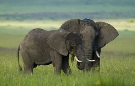 African countries fight to protect elephants | GarryRogers Biosphere News | Scoop.it