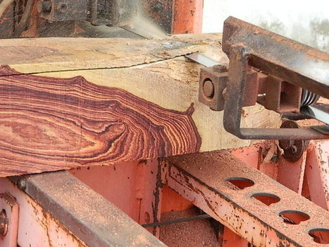 Global Wood Source In | penn66ht | Scoop.it