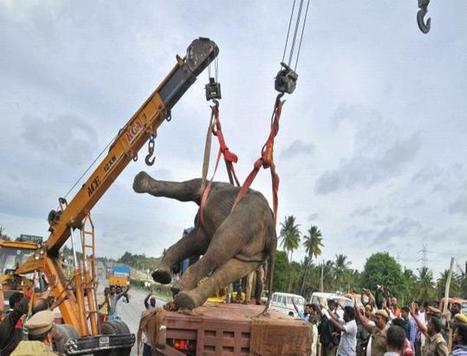 Elephant seriously hurt after being hit by bus | Pachyderm Magazine | Scoop.it