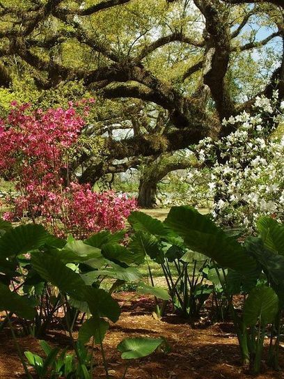 Pin by David Rhodes on Great Travel Ideas | Pinterest | Oak Alley Plantation: Things to see! | Scoop.it