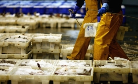 Food and drink could rival oil and gas as Scotland's biggest export - Business - Scotsman.com | The Glory of the Garden | Scoop.it