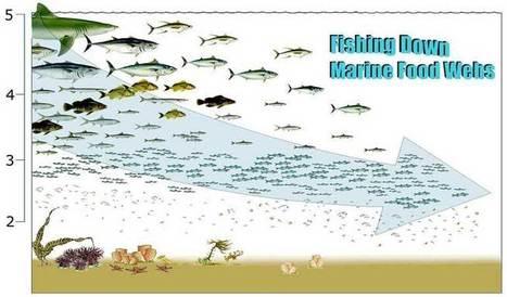 Marine Food Webs | Interactions in Ecosystems | Scoop.it