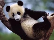 Google: le 5 maggiori novità dell'algoritmo Panda @skande | BlogItaList | Scoop.it