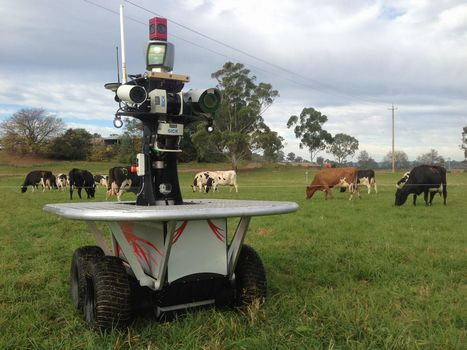 En Australie, des troupeaux de vaches seront gardés par des robots | Internet of Things & Innovation | Scoop.it