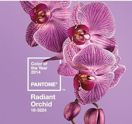 pantone - color - of - the - year -2014-radiant-orchid | current color trends | Scoop.it