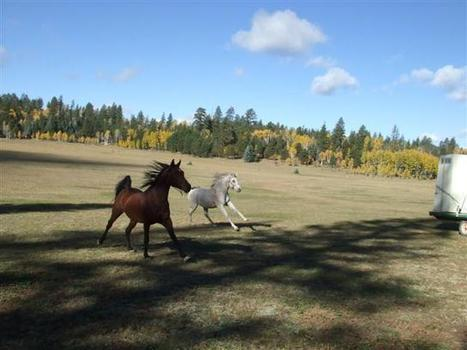 Endurance Rider Basics: What to do when…. | Karen's Musings ... | Endurance and Competitive Trail Riding | Scoop.it