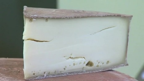 Des ferments lactiques made in Haute-Savoie - France 3 Alpes   thevoiceofcheese   Scoop.it