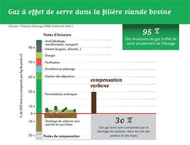 Cop 21 : L'élevage bovin compense en partie ses émissions par le stockage du carbone | Ecologie, Agro-écologie, Enseignement agricole | Scoop.it