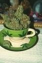 Marihuana despenalizada en Suiza desde el 1 de Octubre | thc barcelona | Scoop.it