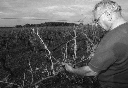 Pierre Ferrand, figure de la viticulture, s'est éteint   Actualités du Cognac   Scoop.it