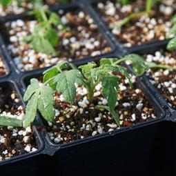 How to Start from Seeds: Organic Gardening | In the garden | Scoop.it