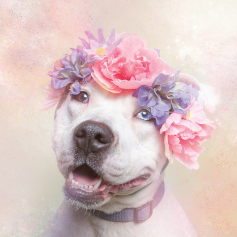 4 Photos That Will Change The Way You See Pit Bulls | xposing world of Photography & Design | Scoop.it