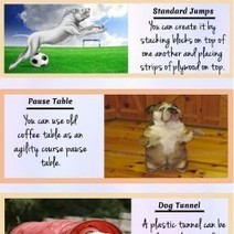 Special Bulldog Training Tips For Better Lifestyle | Visual.ly | Castlewood Bulldogs | Scoop.it
