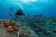 El Niño menace les coraux d'un blanchissement sans précédent | Economie Responsable et Consommation Collaborative | Scoop.it