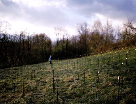 Mille metres sur terre - Cartigny - Rudy Déceliere | DESARTSONNANTS - CRÉATION SONORE ET ENVIRONNEMENT - ENVIRONMENTAL SOUND ART - PAYSAGES ET ECOLOGIE SONORE | Scoop.it