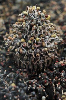 Art Basel se lanza desde Hong Kong a la conquista del mercado - El País.com (España)   Contemporary Art   Scoop.it